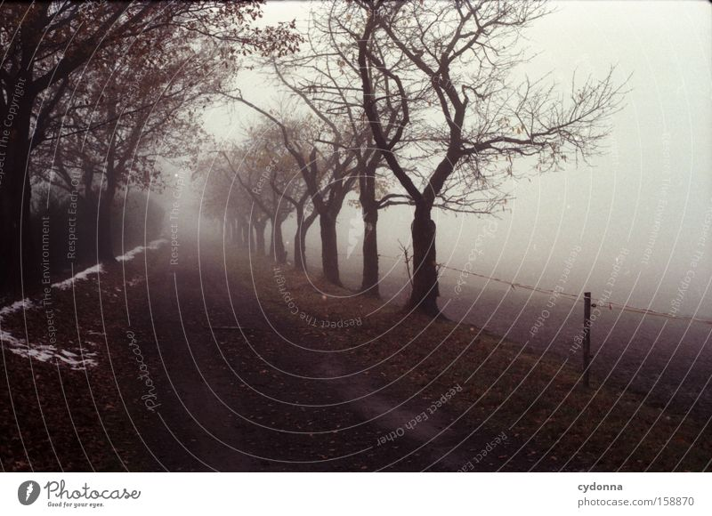 A way into the unknown Autumn Tree Nature Transience Seasons Landscape Longing Analog Far-off places Leaf Life Fog Avenue Lanes & trails Cold Empty