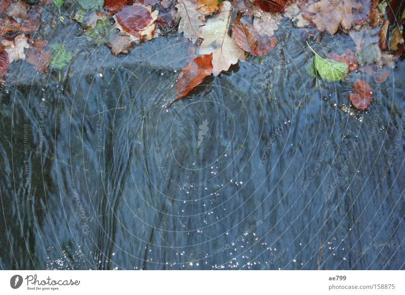Water Leaf Autumn Glittering River Brook Waterfall Flow