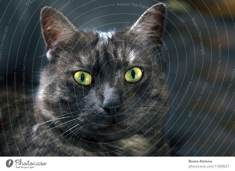 Cat Nature Beautiful Green Animal Black Face Eyes Warmth Life Friendship Living or residing Glittering Illuminate Communicate Observe