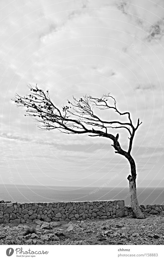 Wind from right Tree Coast Wall (barrier) Sparse Loneliness Twig Ocean Horizon Clouds Far-off places Vantage point Rock Stony Transience