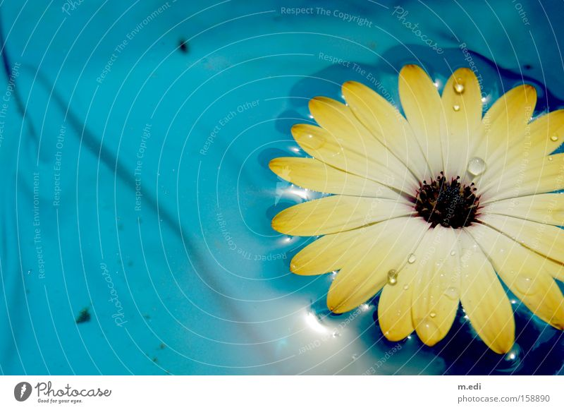 Water Flower Blue Summer Yellow Warmth Drops of water Swimming pool Sports