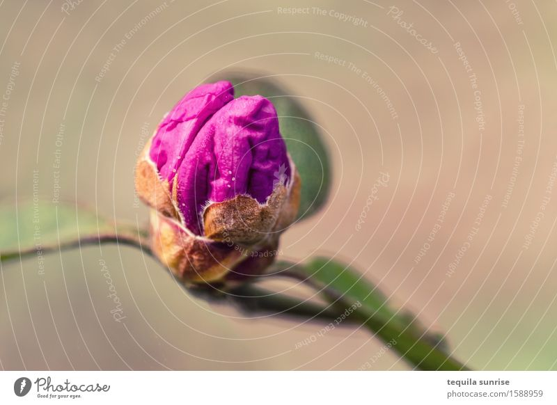 pink brain Brain and nervous system Environment Nature Plant Leaf Blossom Wild plant Bud Garden Park Brown Pink Colour photo Multicoloured Exterior shot