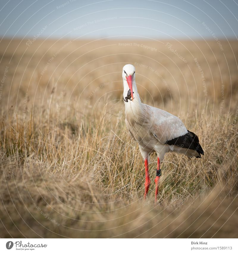 Nature Vacation & Travel Red Animal Environment Meadow Food Bird Horizon Tourism Wild Free Wild animal Birthday Appetite Balance
