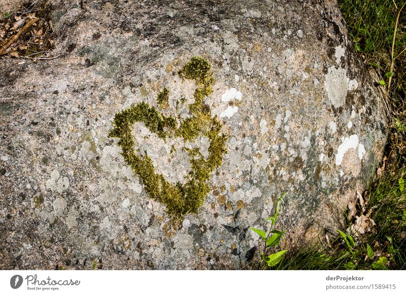 A heart of stone Vacation & Travel Tourism Far-off places Freedom Sightseeing Summer vacation Environment Nature Landscape Plant Animal Elements Rock Fjord