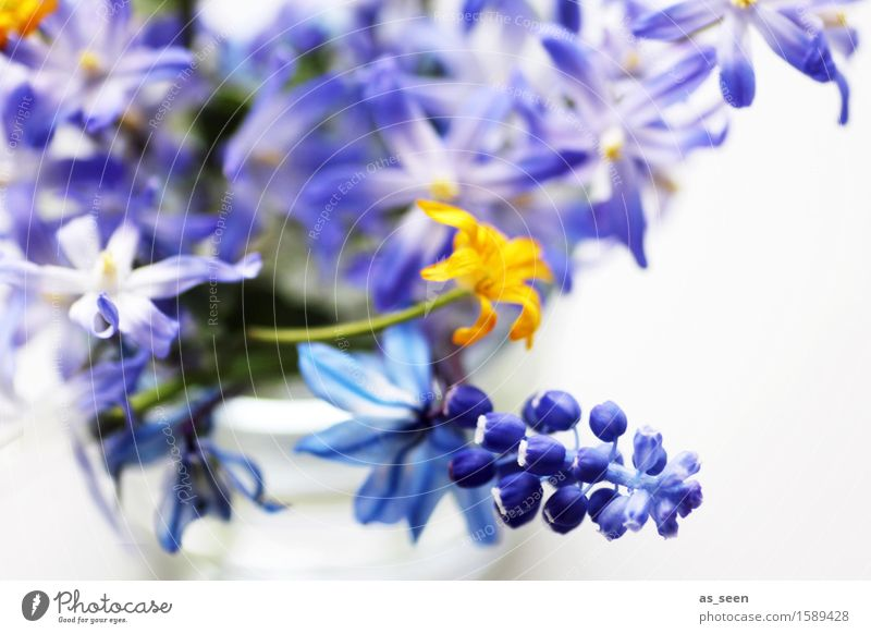 Nature Plant Blue Colour White Environment Yellow Life Blossom Spring Contentment Decoration Authentic Esthetic Creativity Blossoming
