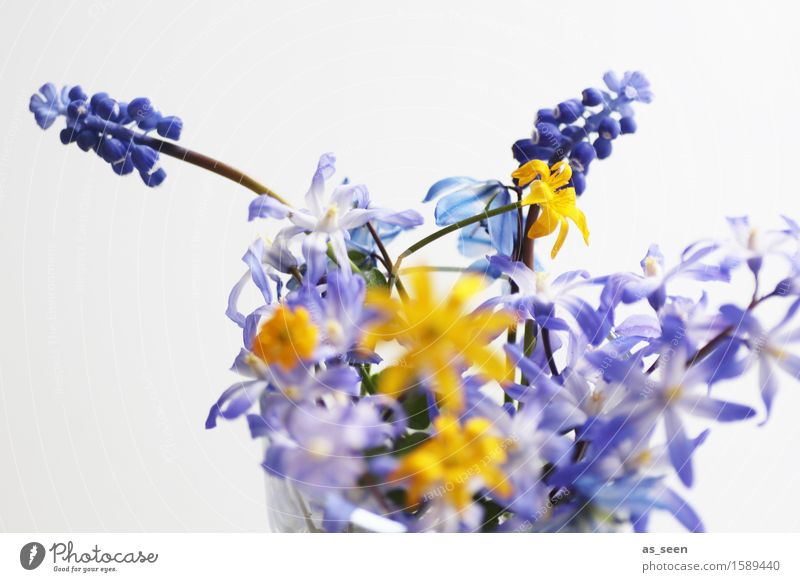Nature Plant Blue Summer Colour White Flower Environment Yellow Blossom Spring Lifestyle Garden Leisure and hobbies Decoration Creativity