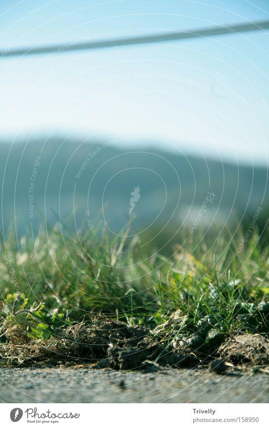 willow(t)e Far-off places Pasture Meadow Green Landscape Evergreen Horizon Grass Farm Summer Fresh Earth lissom
