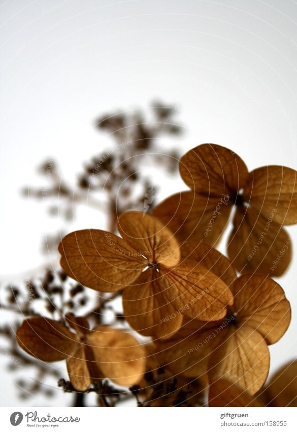 Flower Plant Winter Calm Autumn Death Blossom Grief Transience Past Dry Distress Twig Memory Faded Dried