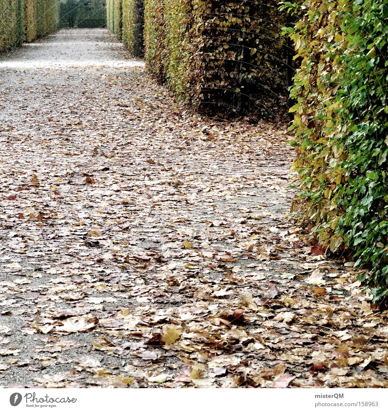 """Labyrinth of Everyday Life"" or ""Many Paths Lead to Rome"" Maze Garden Park Green Autumn Leaf To go for a walk Castle yard Task Challenging Muddled Puzzle"