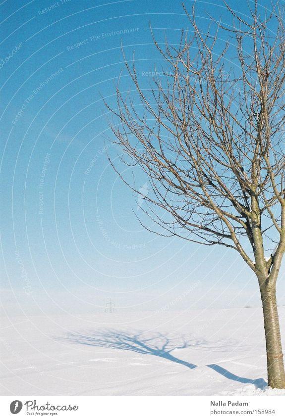 Nature Sky White Tree Blue Plant Winter Cold Snow Landscape Beautiful weather Bleak Bochum Cloudless sky