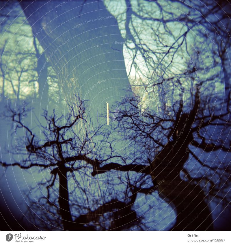 Nature Tree Blue Winter Dark Holga Threat Branch Tree trunk Twig Muddled Double exposure Medium format