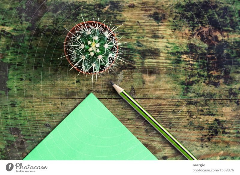 Sending unpleasant messages with cactus, paper and pencil on an old wooden table Decoration Desk Study Office work Workplace Advertising Industry Business