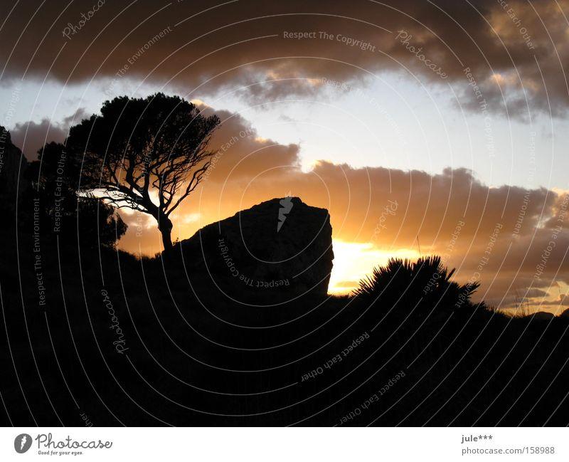 Sunset Twilight Evening Clouds Stone pine Dark Shadow Skyline Horizon Mysterious Mountain