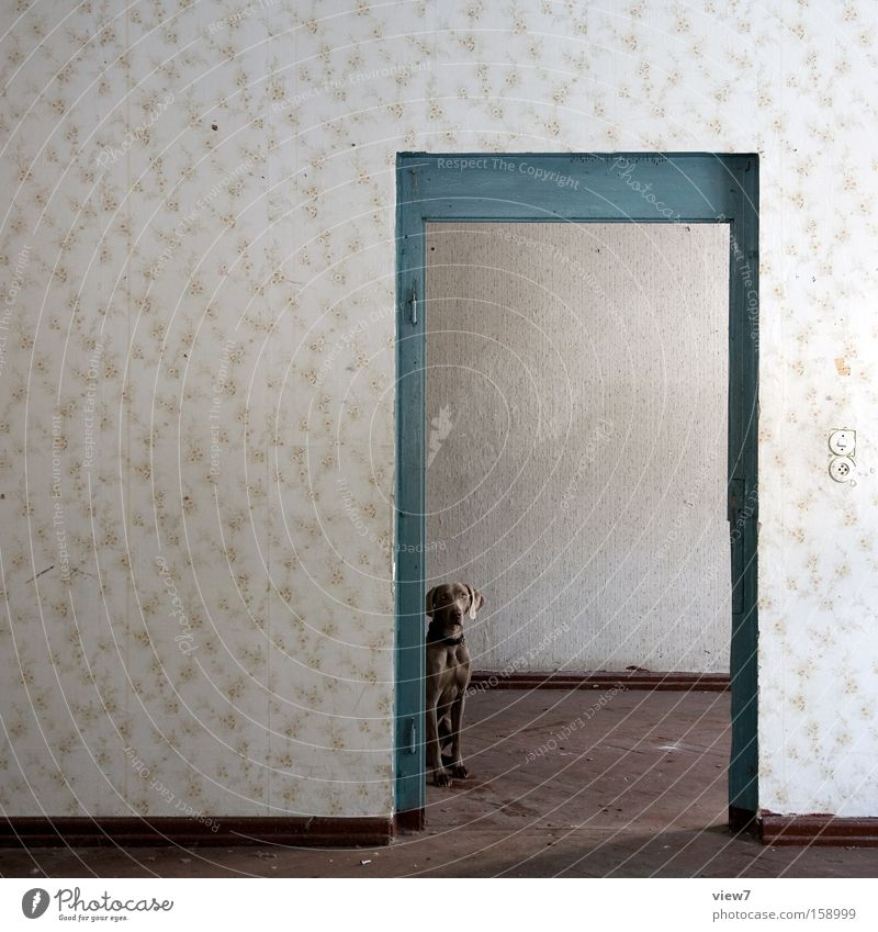 Old Dog Room Wait Door Places Ground Floor covering Decoration Pelt Wallpaper Mammal Seating Parquet floor Forget Location