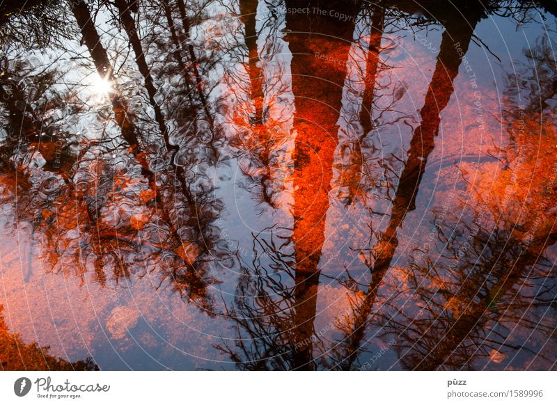 Red Mirror Environment Nature Landscape Plant Water Sun Sunlight Weather Beautiful weather Tree Forest Pond Lake Brook River Dark Wet Black Emotions Sadness