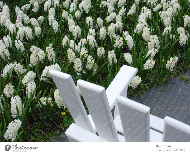 White Flower Calm Relaxation Park Bench Tulip