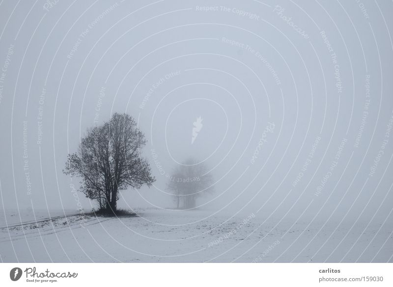 White Tree Winter Calm Snow Sadness Think Fog Grief Frost Distress Motionless Diffuse To be silent