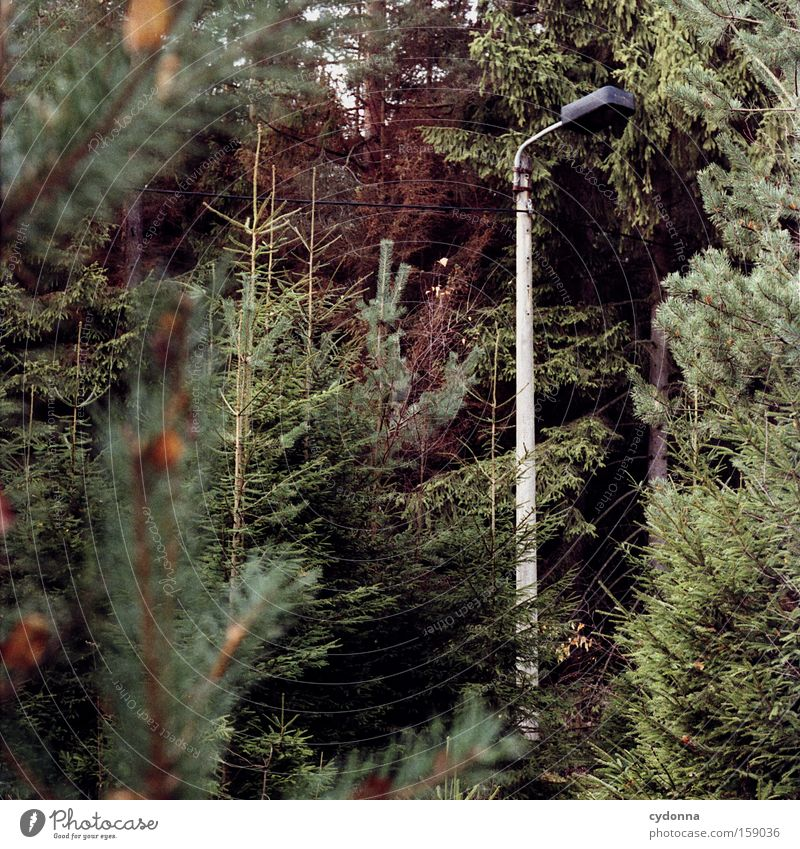 Grown in a concrete mixer Loneliness Society Habitat Concrete East GDR Time Past Transience Lamp Forest Coniferous trees Lantern Spruce Detail Gloomy Remainder