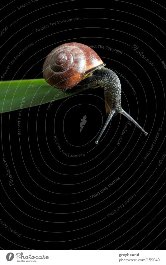 Plant Leaf Animal Emotions Fear Brave Edge Distress Snail Crawl Downward Panic Snail shell