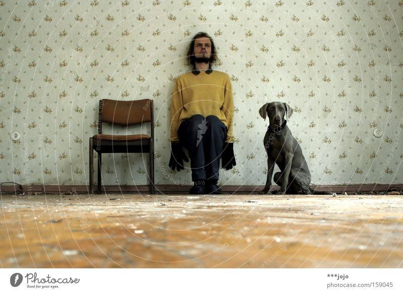 Man Wall (building) Dog 3 Sit Posture Chair Wallpaper Derelict Decline Trashy Watchfulness Mammal Strange Nerviness