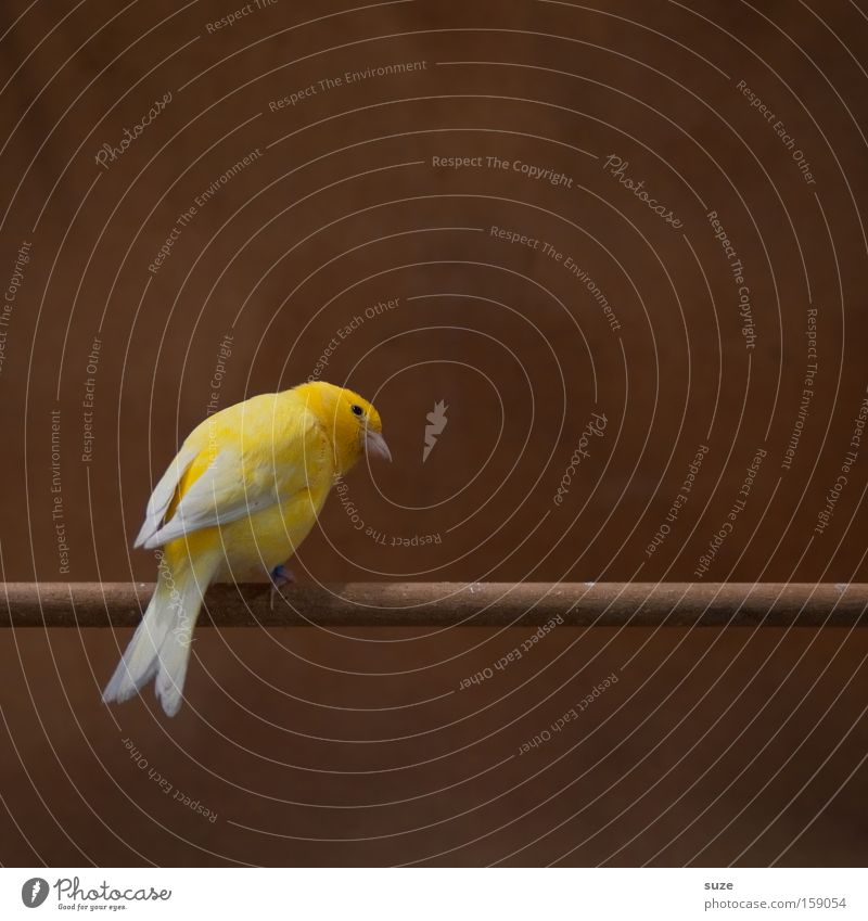 Beautiful Loneliness Animal Yellow Funny Natural Small Brown Bird Sit Authentic Wait Feather Cute Curiosity Concentrate