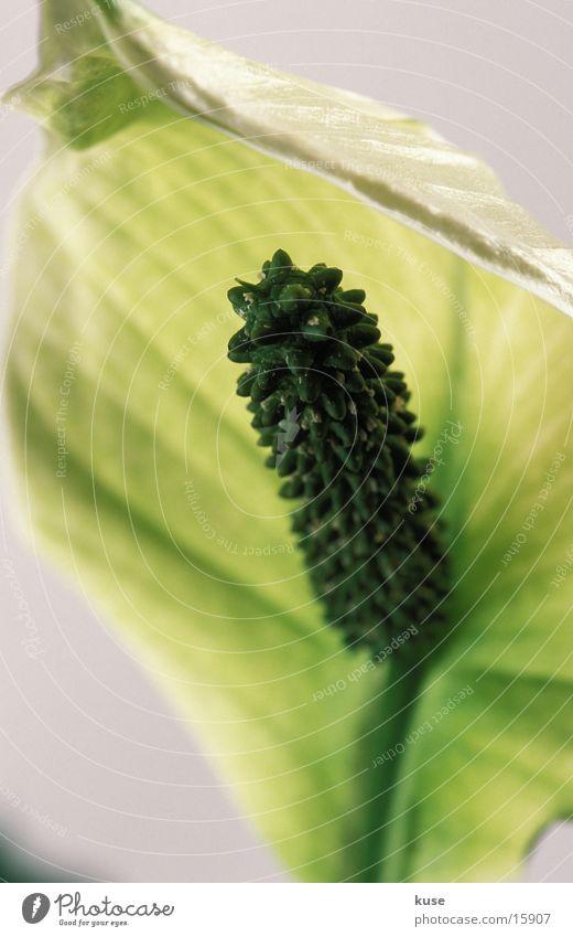 flower 01 Flower Studio shot Nature Detail Close-up
