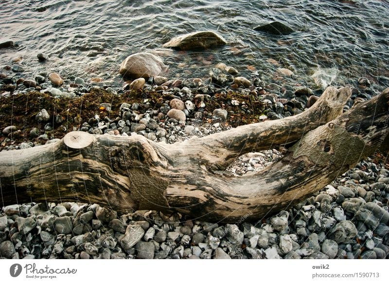 piece of wood Environment Nature Water Climate Beautiful weather Tree trunk Coast Beach Baltic Sea Stone Lie To dry up Old Transience Colour photo Exterior shot