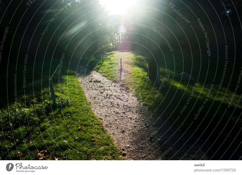 Nature Plant Green Tree Landscape Environment Lanes & trails Grass Illuminate Idyll