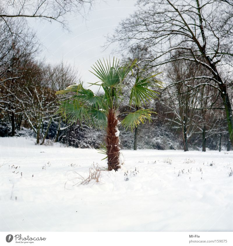green is the hope Palm tree The Ruhr River Snow Winter Green Hope Tree Joy January