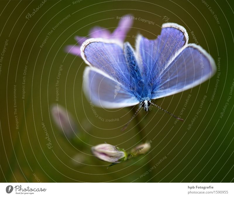 Nature Blue Beautiful Green Animal Forest Environment Meadow Natural Happy Garden Flying Park Field Wild animal Esthetic