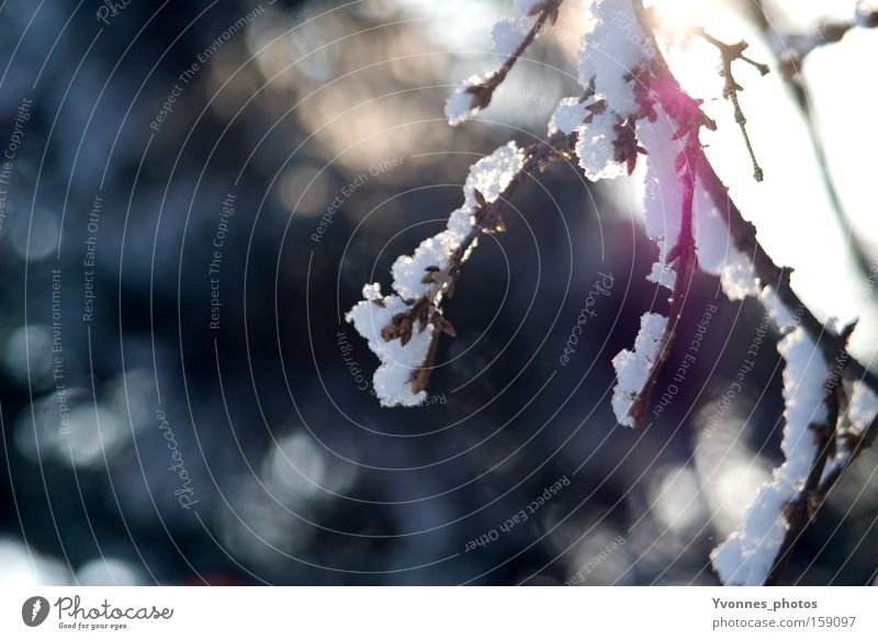 Nature White Winter Cold Snow Ice To go for a walk Frost Frozen Enchanting Jinxed Winter walk