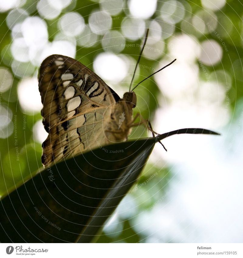 Leaf Legs Small Wing Insect Delicate Butterfly Paradise Feeler