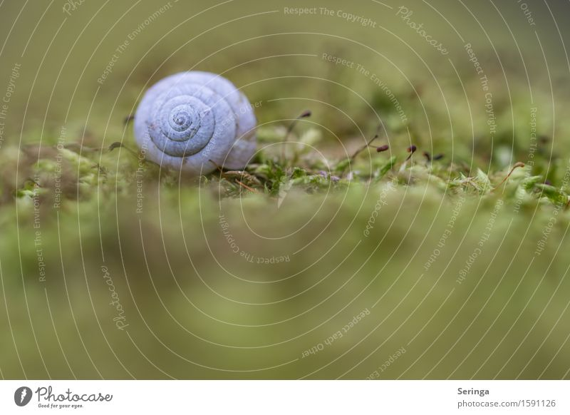 Villa in the green Nature Plant Animal Spring Grass Bushes Moss Garden Park Meadow Field Forest Wild animal Snail 1 Glittering Snail shell Colour photo