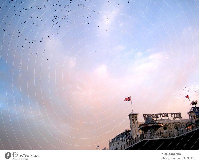 Sky Ocean Blue Red Bird Flag Harbour Longing Monument Jetty Landmark England Flock Brighton