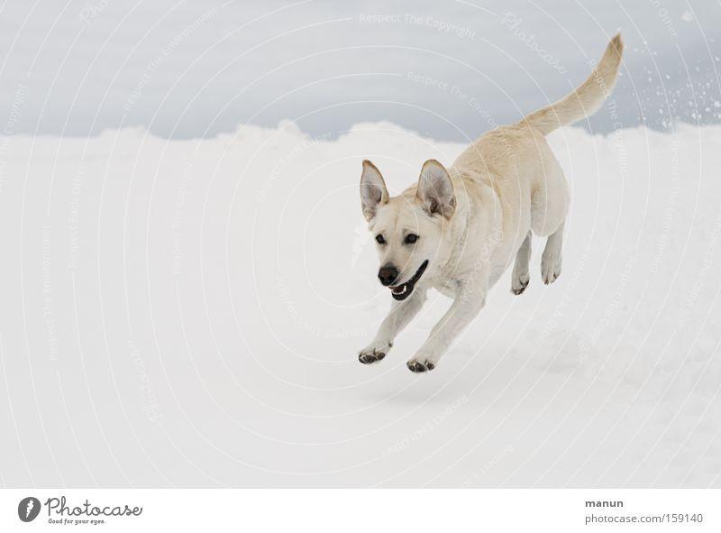 Nature Beautiful Joy Winter Animal Snow Jump Movement Happy Dog Bright Funny Running Happiness Joie de vivre (Vitality) Natural