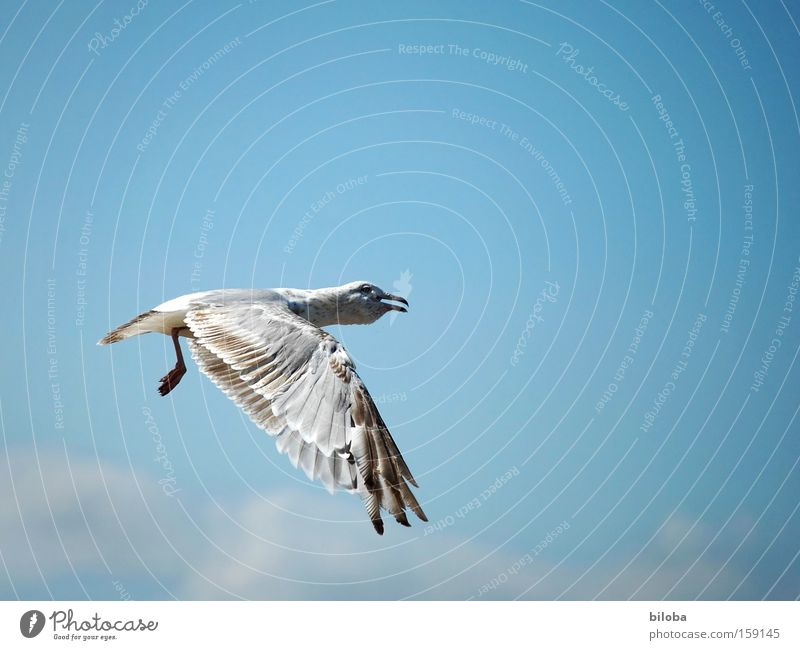 Ocean Animal Bird Flying Aviation Dangerous Feather Wing Anger Wing Stress Stupid Neck Seagull North Sea Aggravation
