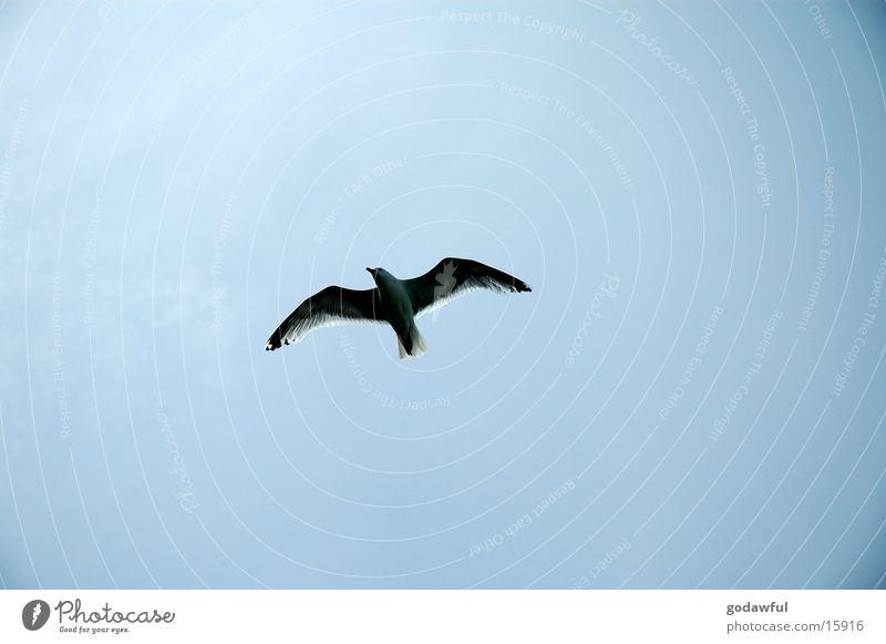 Sky Bird Aviation Wing Hover