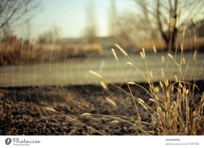 Nature Winter Colour Grass Moody Field Concrete Film Simple Analog Seasons Fairy tale Slide Fallow land
