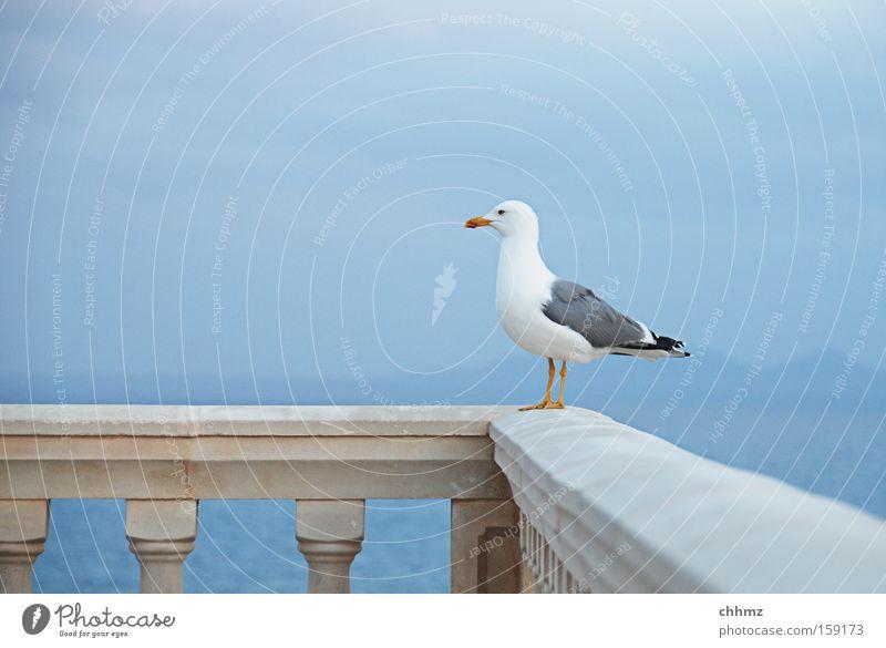 Good prospects Seagull Bird Ocean Coast Far-off places Handrail Bridge railing Vantage point Horizon Lake Island Sky