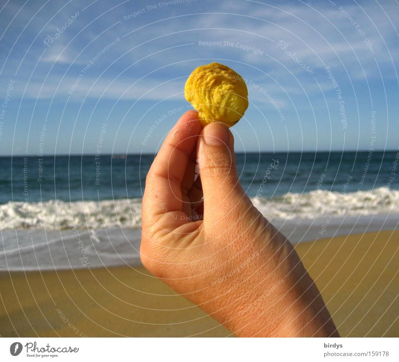 caribian sunshell Happy Summer vacation Beach Ocean Waves Hand Sand Water Sky Beautiful weather Coast Mussel Illuminate Exotic Bright Blue Yellow Caribbean Sea