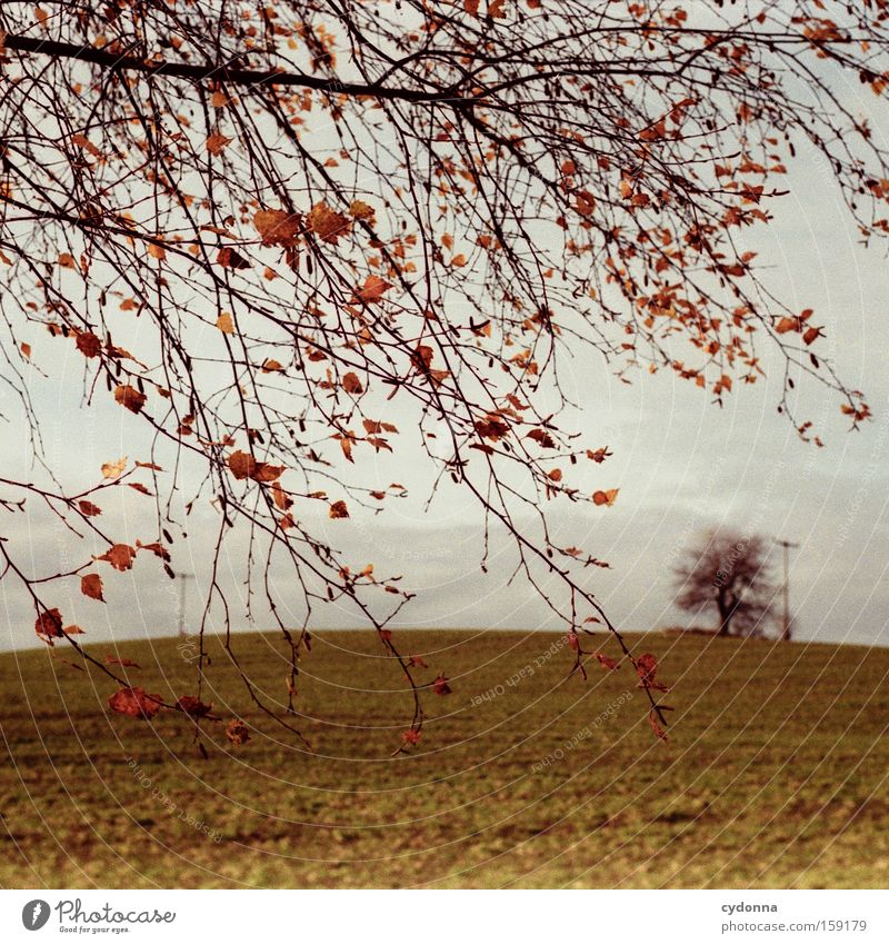 Nature Beautiful Tree Leaf Far-off places Autumn Landscape Air Field Wind Branch Longing Analog Twig