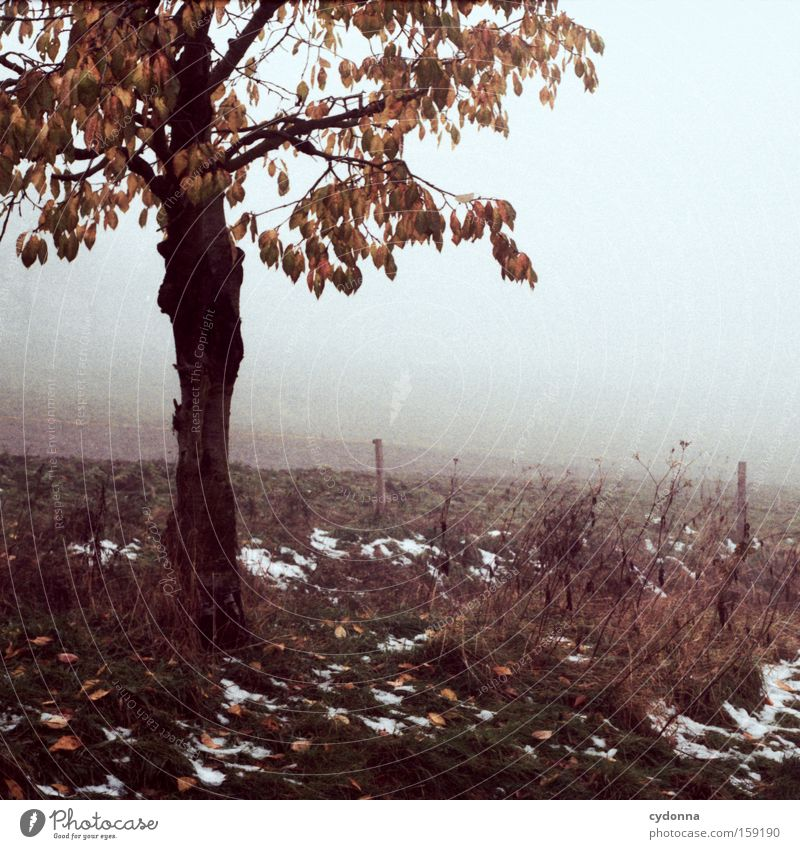 The first snow Autumn Tree Nature Field Landscape Longing Analog Far-off places Branch Twig Leaf Fog Beautiful Snow Transience