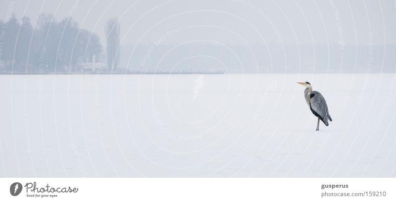 White Cold Snow Ice Bird Cool (slang) Frozen Express train Heron