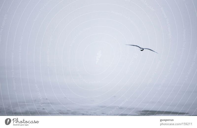 White Cold Snow Ice Bird Cool (slang) Frozen Express train Gull birds