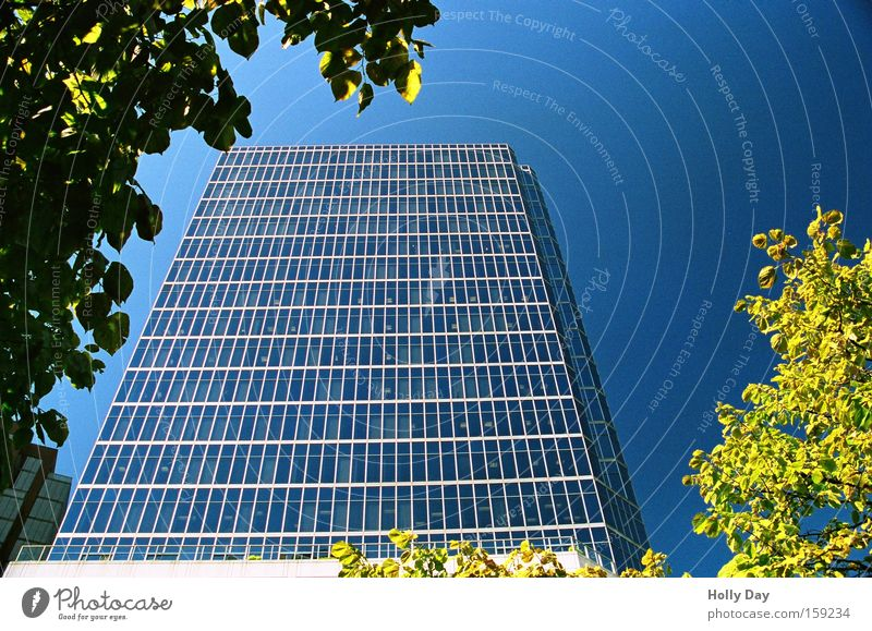 Glass house in frame High-rise Blue sky New Town Bright Block Leaf Tree Frame Clear sky Cloudless sky Worm's-eye view Vertical Skyward Glas facade Monumental