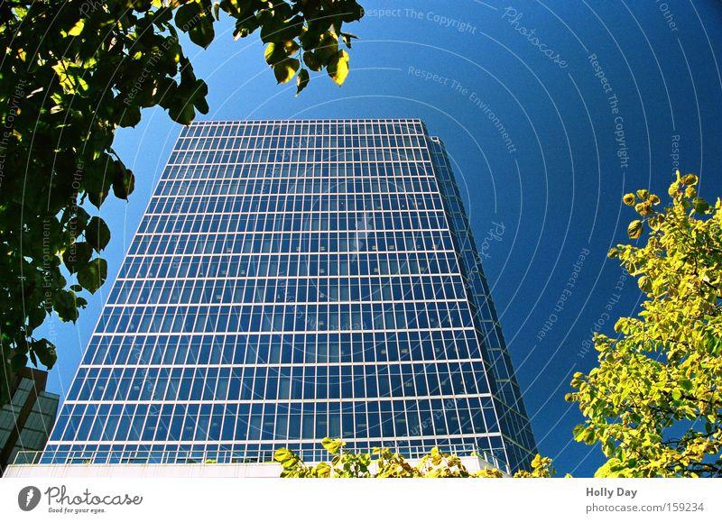 Tree City Leaf Bright High-rise New Frame Block Vertical Blue sky Monumental Glas facade Cloudless sky Skyward Clear sky