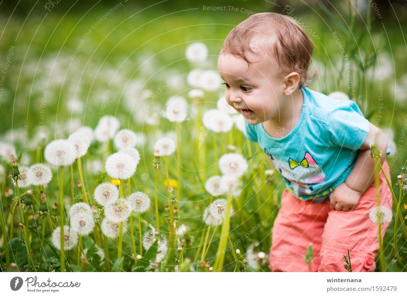 Wow, look what's theree! Human being Child Baby Toddler Girl 1 1 - 3 years Environment Nature Grass dandelion Garden Park Field Feeding To enjoy Laughter Love