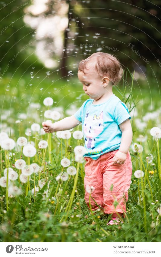fly Well-being Garden Toddler Girl 1 Human being 1 - 3 years Nature Dandelion Park Field Touch Catch Flying Looking Stand Free Happiness Fresh Happy Uniqueness