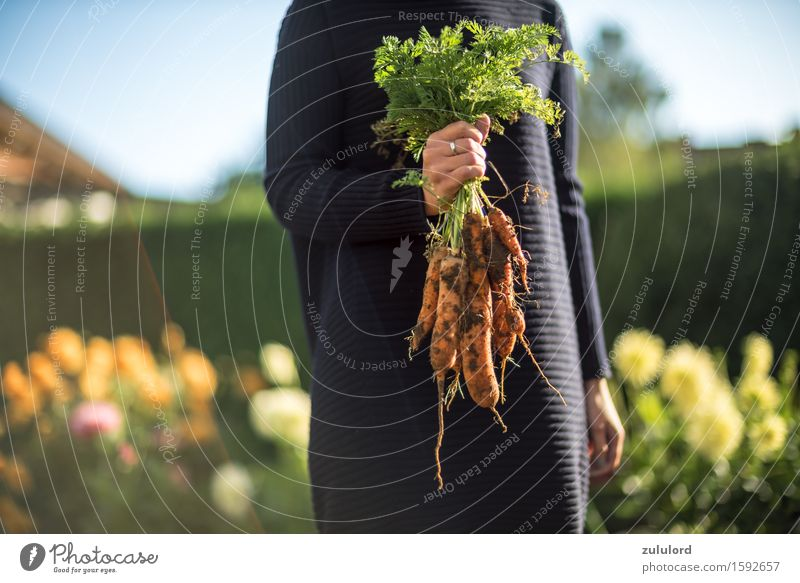 carrots Healthy Feminine Young woman Youth (Young adults) 1 Human being Carrot Green Garden Gardening Harvest Organic produce self-grown Domestic farming