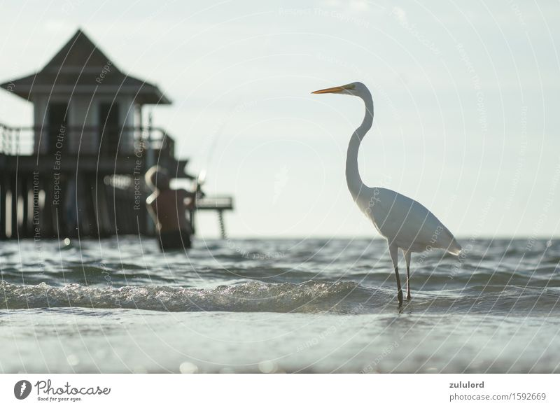 the Heron Bird Turquoise White Pride Vacation & Travel Angler Jetty Ocean Waves Water Wet Animal waterfowl Leisure and hobbies Shallow depth of field Blur